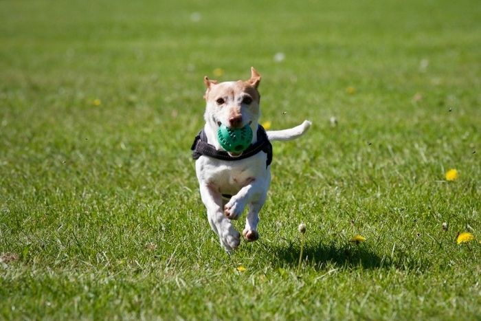 What are the Best Dog Parks and Locally Owned Pet Stores in Charlottesville, VA?