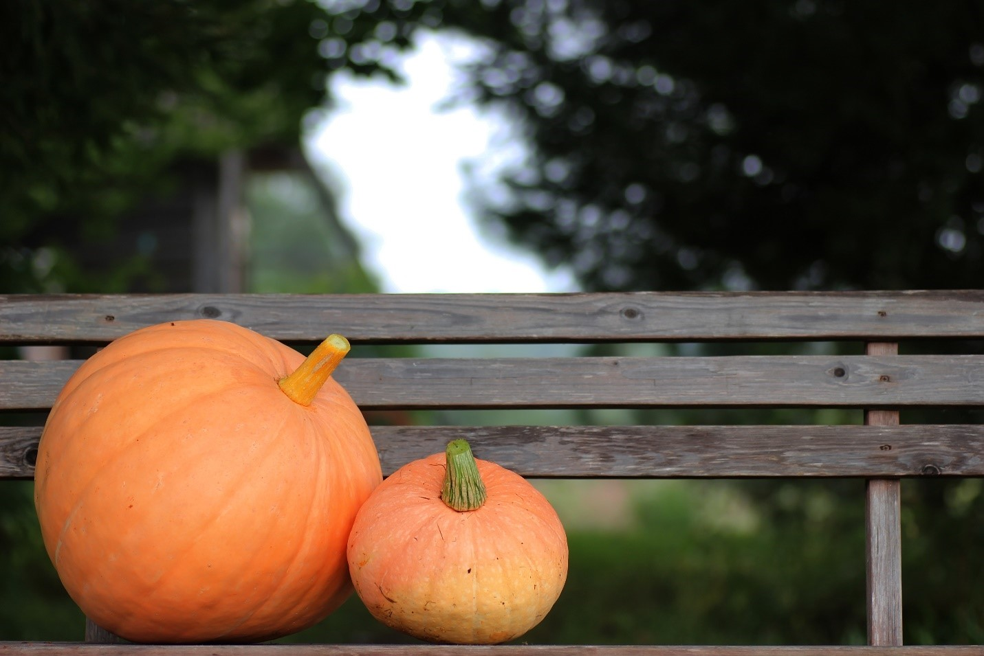 Where to go Pumpkin Picking – Best Pumpkin Patches in the Charlottesville Area